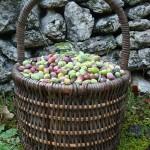 olive-basket