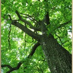 what I learned from a tree innerstream